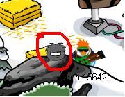 Ninja Puffle Spotted